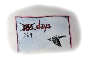 264 days